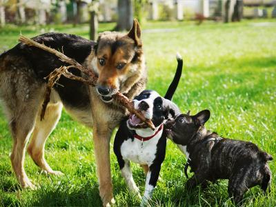 thumbnail of Popular Dog Breeds