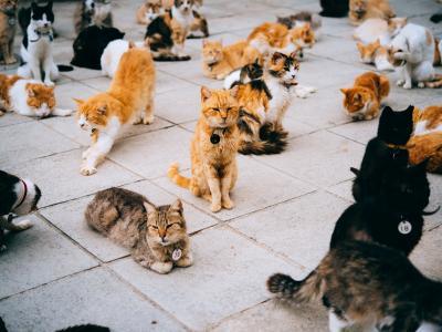 thumbnail of Adopting a Cat