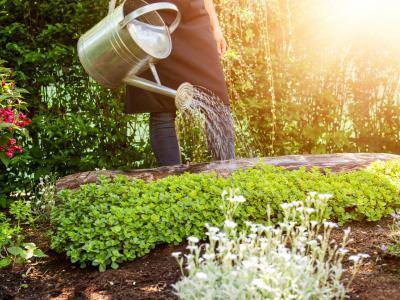 thumbnail of Gardening