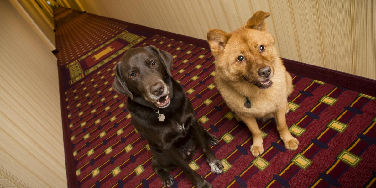 banner of A List of Dog Friendly Hotel Chains