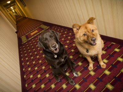 thumbnail of A List of Dog Friendly Hotel Chains